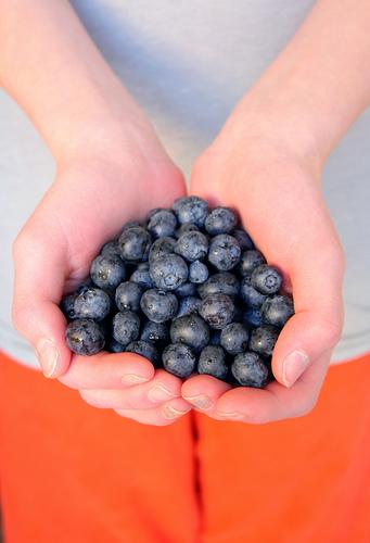 blueberries, photo