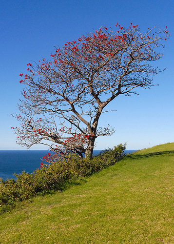 tranquil tree, pic