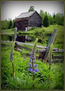 farm, pic