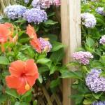 summer garden, pic