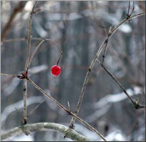 One cherry, pic