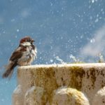 Bird with fountain, pic