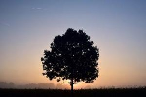 tree silhouette sunset images